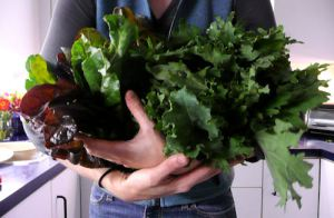 Armful of greens