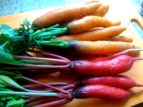 carrots_radishes